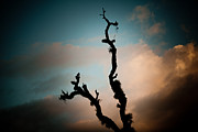 Tibetan Buddhism Posters - Sky and old tree Poster by Raimond Klavins