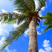 Huahin Photos - Sky and the coconut tree by Juan Jiang