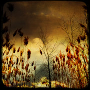 Ornamental Digital Art - Sky Colors - autumn lights by Gothicolors And Crows