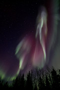 Northern Lights Posters - Sky Dancer Poster by Priska Wettstein