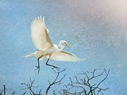 Great Egret Posters - Sky Dancing Poster by Betty LaRue