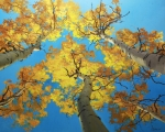 Autumn Tree Color Art - Sky High 4 by Gary Kim
