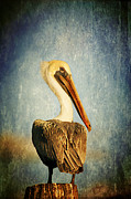 Brown Pelican Prints - Sky Watcher Print by Joan McCool