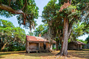 Live Oaks Digital Art Framed Prints - Slave Quarters 2 Framed Print by Steve Harrington