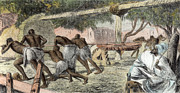 Slaves Irrigating By Water-wheel Print by English School