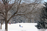 Skiing Print Posters - Sledding At Petrifying Springs Park Poster by Kay Novy