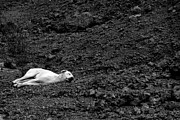 Dattaram Gawade - Sleeping beauty