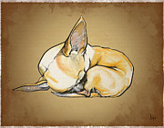 Chihuahua Framed Prints - Sleeping Chihuahua Caricature Framed Print by Canine Caricatures By John LaFree