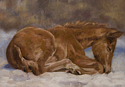 Foal Paintings - Sleeping Gracie by Linda Shantz