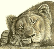 Heidi  Kriel - Sleeping Lion