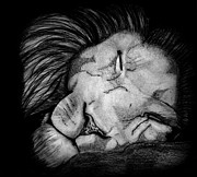 Saki Art Posters - Sleeping Lion Poster by Saki Art