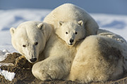 Winter Sleep Photos - Sleeping on Mom by Tim Grams