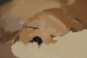 Marta Alfred - Sleeping puppy
