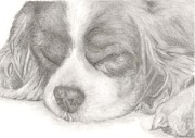 Sleeping Dog Drawings Posters - Sleeping Spaniel Poster by Rebecca Vose