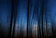 Abstract.trees Prints - Sleepwalking... Print by Nina Stavlund