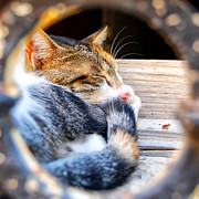 Tabby Art - Sleepy kitty by Antony McAulay