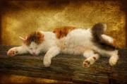 Sleepy Kitty Print by Lois Bryan