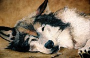 Paws Paintings - Sleepy Wolf by Jean Yves Crispo