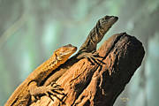 Amphibians Photos - Sleepys Got Your Back by Trish Tritz