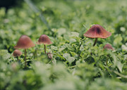 Toadstools Photos - Slightly Magical Mushrooms by Heather Applegate