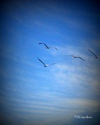 Flying Seagulls Originals - Slip the surly bonds by Priscilla Richardson