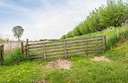 Colorful Dandelions Photos - Sloped wooden gate along a dike by Ruud Morijn