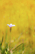 Abstract Art Prints Digital Art Prints - Small Flower in Moss - Greensboro North Carolina II Print by Dan Carmichael
