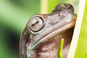 Simon Bratt Photography - Small frog close up
