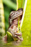 Simon Bratt Photography - Small frog on a plant