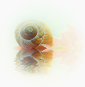 Seashell Art Photo Prints - Small Island Print by Kristin Kreet