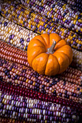 Corns Posters - Small pumpkin with Indian corn Poster by Garry Gay