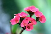 Small Red Flower Print by Henrik Lehnerer