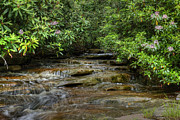 Small Stream In West Virginia With Mountain Laurel Print by Dan Friend