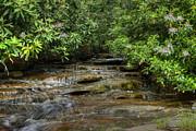 Dan Friend - Small stream in West Virginia with Mountain Laurel