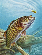 Jq Painting Prints - Smallmouth Bass Print by JQ Licensing