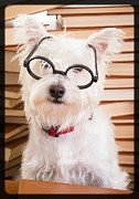 Librarian Framed Prints - Smart Doggie Framed Print by Edward Fielding