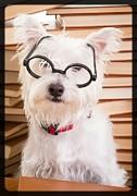 Smart Doggie Print by Edward Fielding