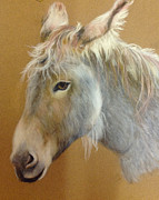 Donkey Pastels Prints - Smarty Print by Anne Smart