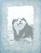 Collies Digital Art Posters - Smile Poster by Ann Powell
