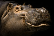 Hippopotamus Metal Prints - Smile Metal Print by Cheri McEachin