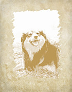 Collies Digital Art Posters - Smile II Poster by Ann Powell