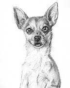 Chihuahua Art Print Prints - Smiling Chihuahua in Charcoal Print by Kate Sumners