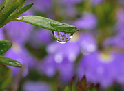 Floral Fine Art Photography Prints - Smiling Drop Print by Irina Wardas