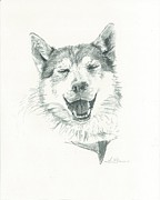Husky Drawings Metal Prints - Smiling Husky Metal Print by Sarah Glass