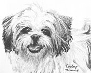 Charcoal Dog Drawing Drawings Posters - Smiling Shih Tzu Poster by Kate Sumners