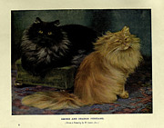Siamese Paintings - Smoke and Orange Persians by W Luker