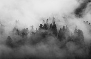 Pines Framed Prints - Smoke on the Mountain Framed Print by Aaron S Bedell