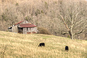 Tennessee Barn Prints - Smoky Mountain Barn 6 Print by Douglas Barnett