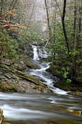 Gsmnp Photos - Smoky Mountain Beauty by Joel E Blyler