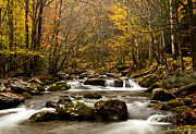 Douglas Stucky Metal Prints - Smoky Mountain Gold II Metal Print by Douglas Stucky